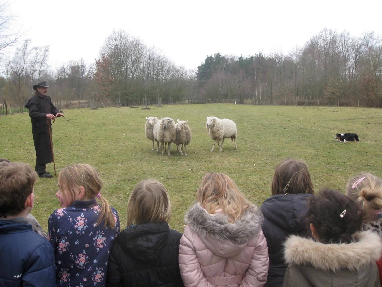 De eersteklassers op bezoek in de schapenstal