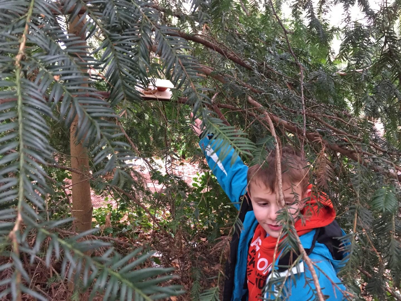 Techniekdag derde leerjaar Vogels helpen in de winter