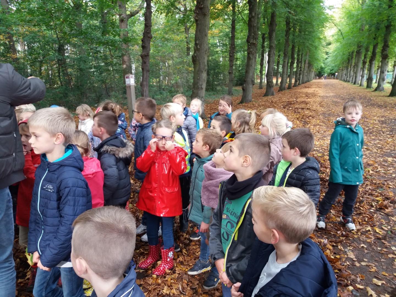 Eerste leerjaar op leerwandeling naar het bos
