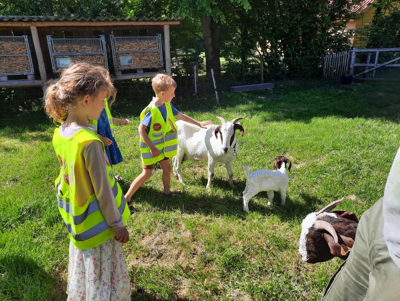 1A op bezoek bij de geitjes en cavia's van Driesje